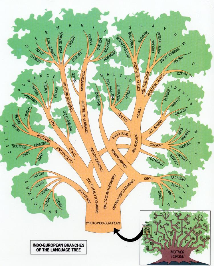 https://anthropologynet.wordpress.com/files/2008/02/indoeuropean-language-family-tree.jpg